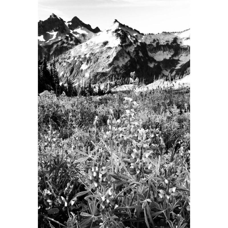 Black Alps